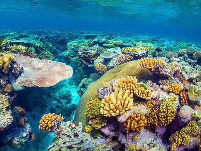 What Are Coral Reefs? - Facts & Types | Study.com